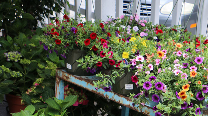 colorful flowers at carlmont village shopping center