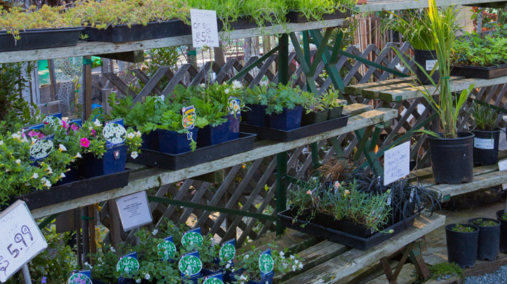 plants on display at carlmont village shopping center